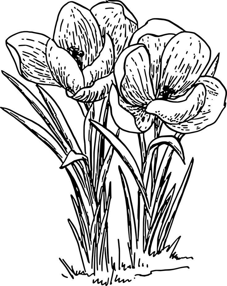 Drawings Of Spring Flowers
