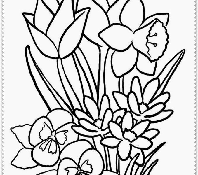 Drawings Of Spring Flowers Free Download Best Drawings Of Spring