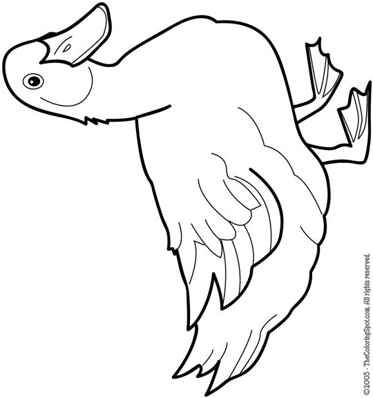 540x576 Duck Clipart Coloring Page