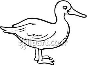 300x225 Black And White Duck