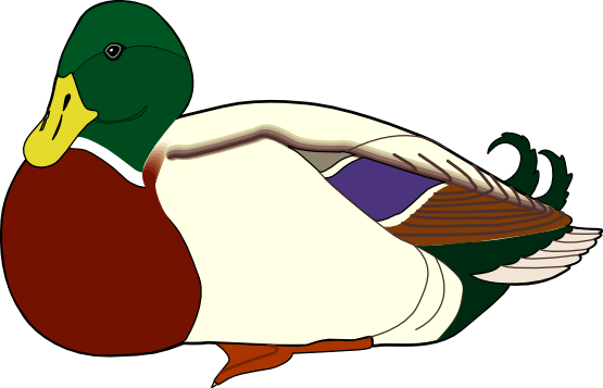 555x357 Duck Clipart One
