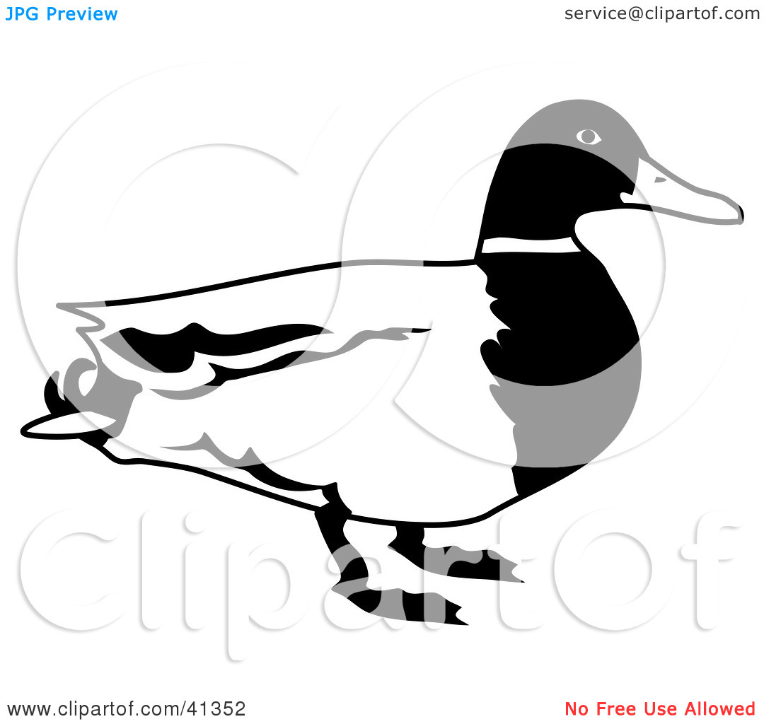 1080x1024 Mallard Duck Clipart Black And White