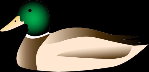 502x241 Duck Clipart High Resolution