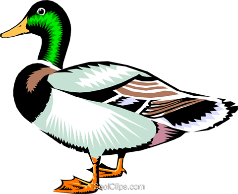 480x391 Mallard Duck Royalty Free Vector Clip Art Illustration Anim0213
