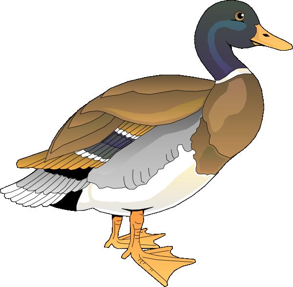 600x588 Walking Duck 2 Clip Art