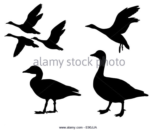 640x526 Duck Hunting Black And White Stock Photos Amp Images