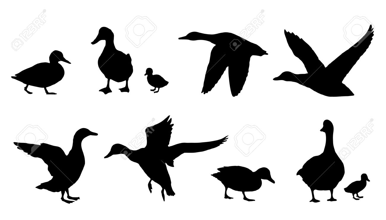 1300x742 Duck Hunting Silhouette