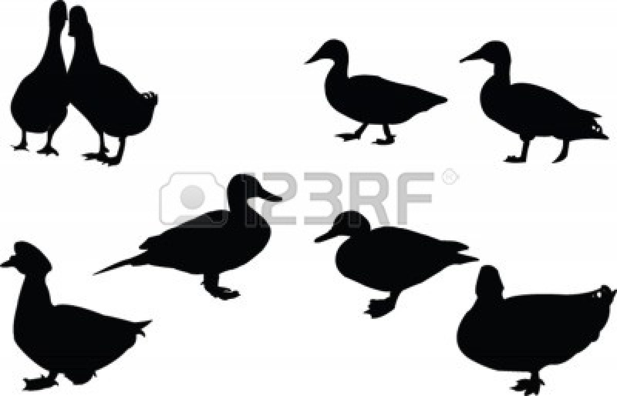 1200x771 Landing Duck Decal