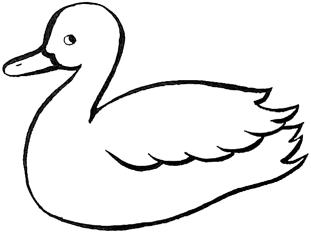 618x494 Duck Outline