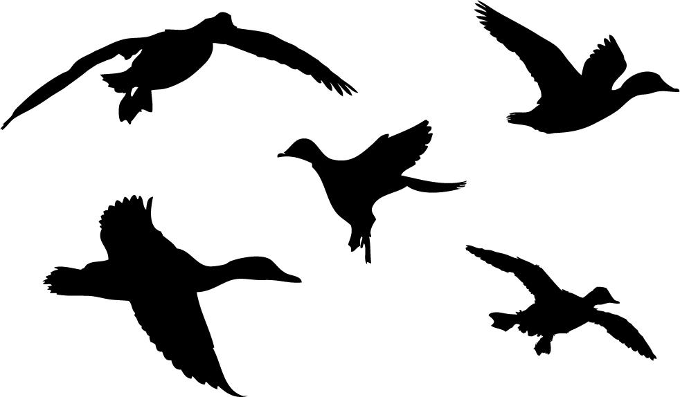 982x574 Duck Silhouette