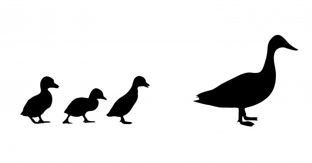 615x322 Duck Amp Ducklings Silhouette Free Stock Photo