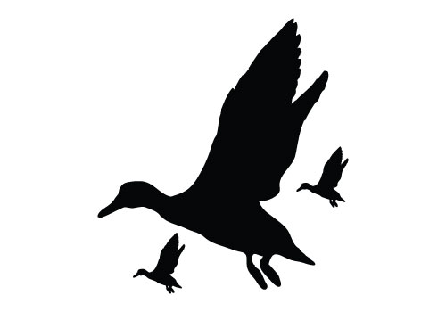 500x350 Graphics For Flying Duck Clip Art Graphics