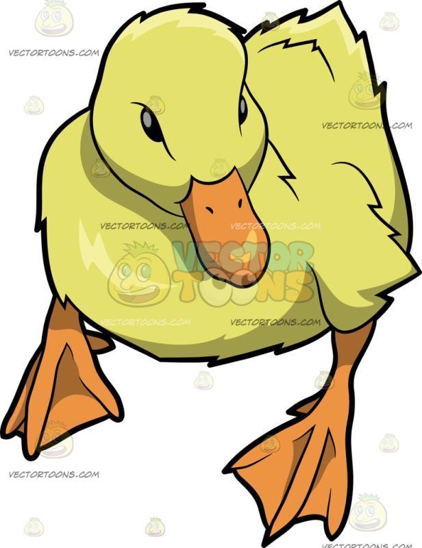 616x800 Quack Clipart