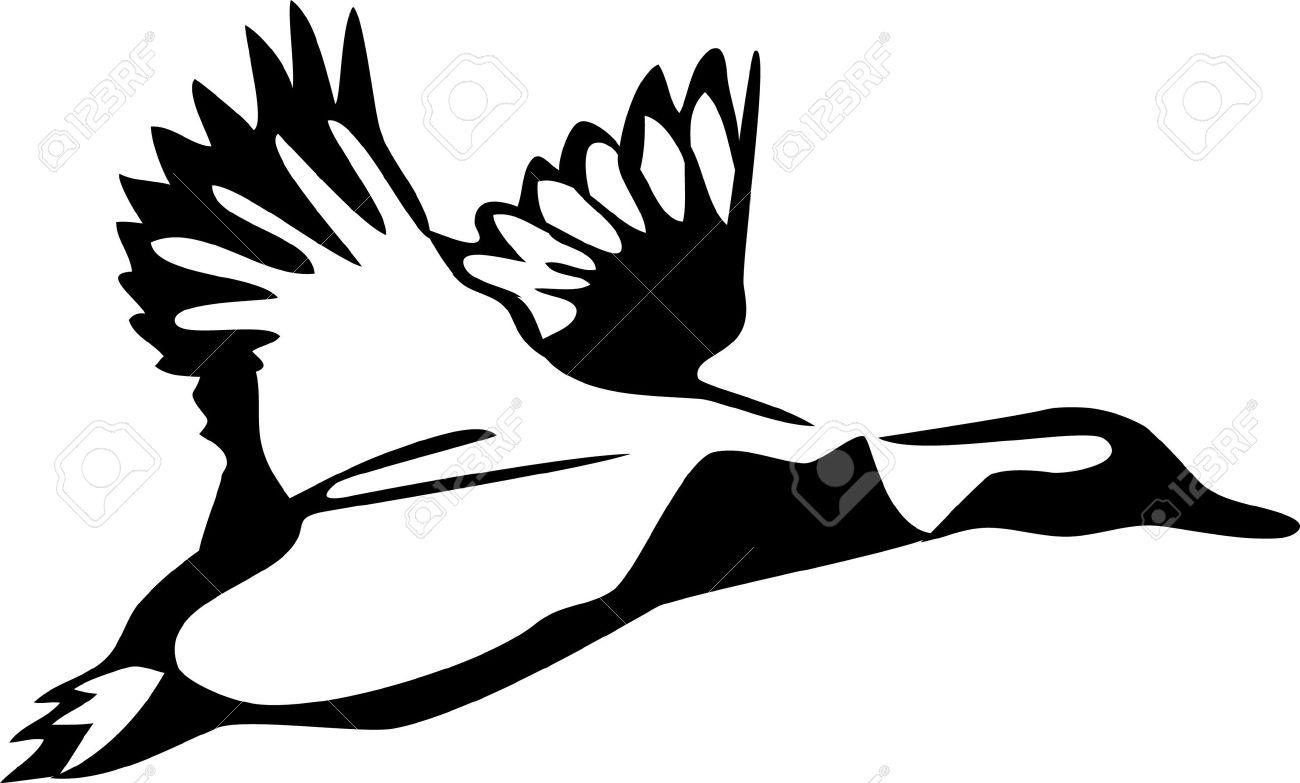 1300x783 Duck Clipart Waterfowl