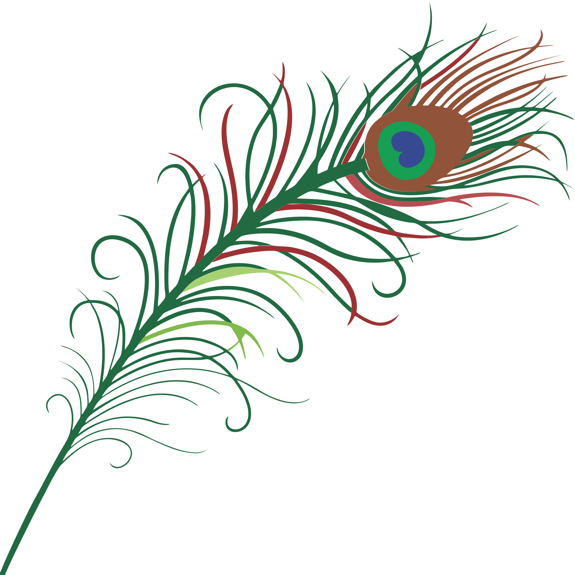 2000x2000 Free Peacock Feather Clipart Clipart And Vector Image