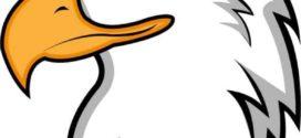 272x125 Clipart Eagle Head 101 Clip Art On Cartoon Eagle Head
