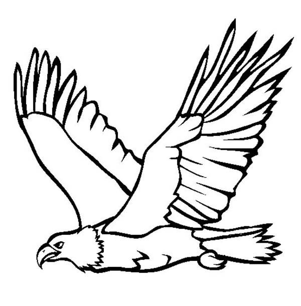 Eagle outline. Cliparts free download best