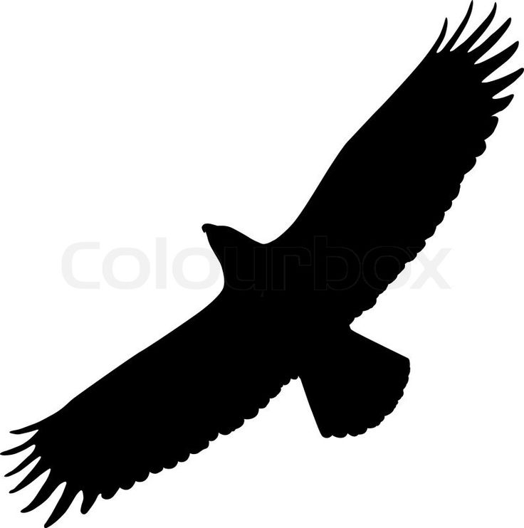 Eagle Outline Cliparts | Free download best Eagle Outline