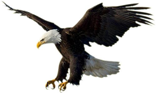501x298 Patriotic Eagle Clip Art Image