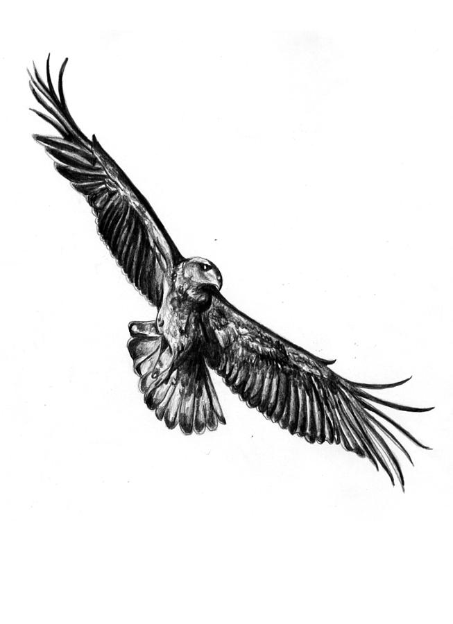 653x900 Black Eagle Clipart Flying Eagle
