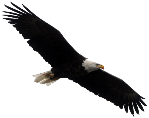 500x396 Bald Eagle Transparent Images Free Download Clip Art