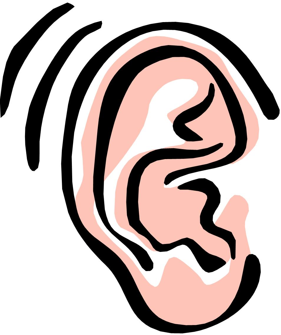 954x1137 Clip Art Ears