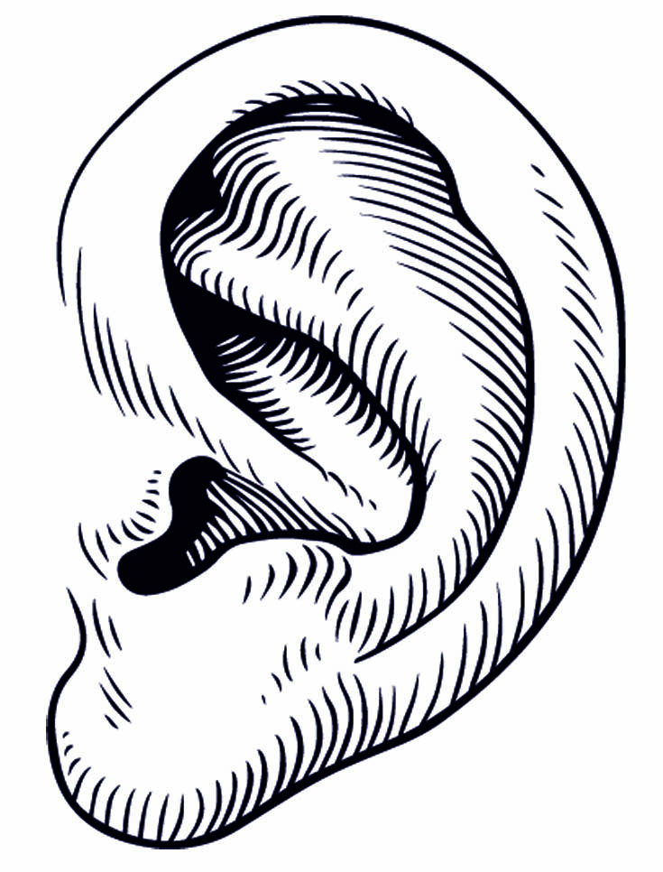 735x966 Pictures Of A Ear Clipart