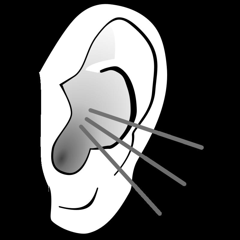 800x800 Listening Ear Clipart 2