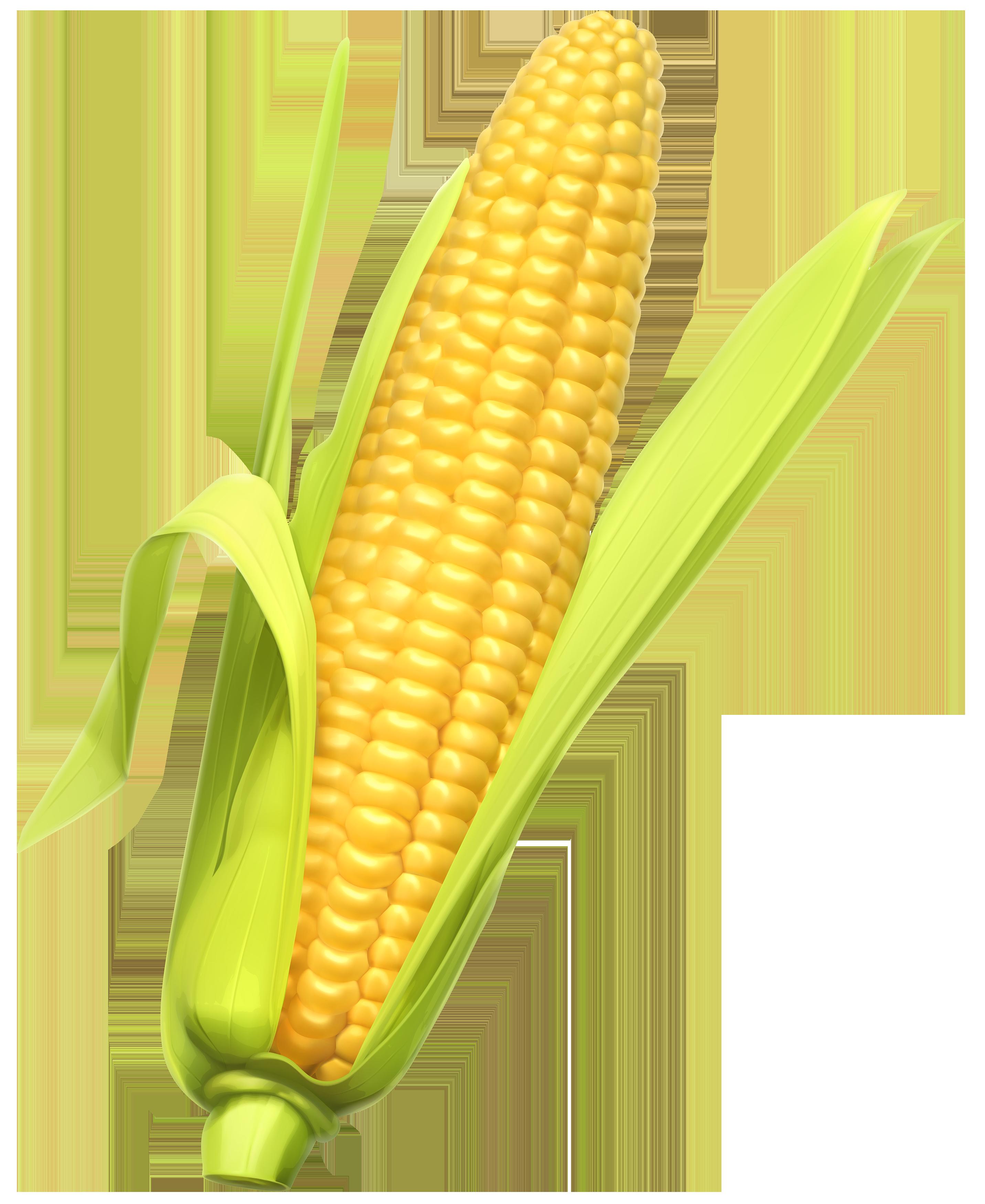 2863x3500 Corn Clip Art Free Clipart Images 4 3