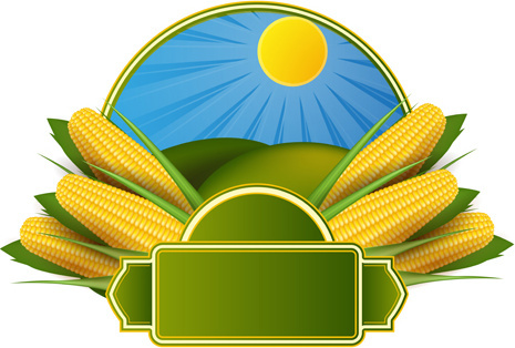 465x314 Corn Free Vector Download (108 Free Vector) For Commercial Use