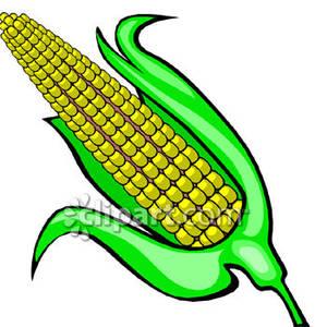 289x300 Ear Of Corn