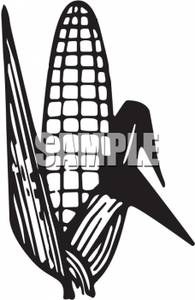 195x300 And White Ear Of Corn Clip Art Image