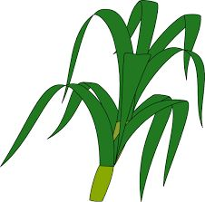 226x223 Corn Clipart Corn Clip Art