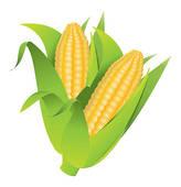 164x170 Clip Art Of Corn Cobs K3651097