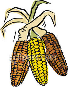 236x300 Clipart Free Indian Corn
