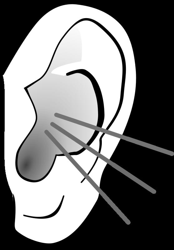 557x800 Ear Clip Art Biezumd