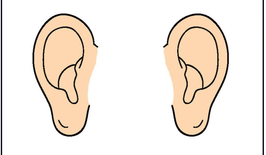 1024x600 Ear Pictures Clip Art Clipart