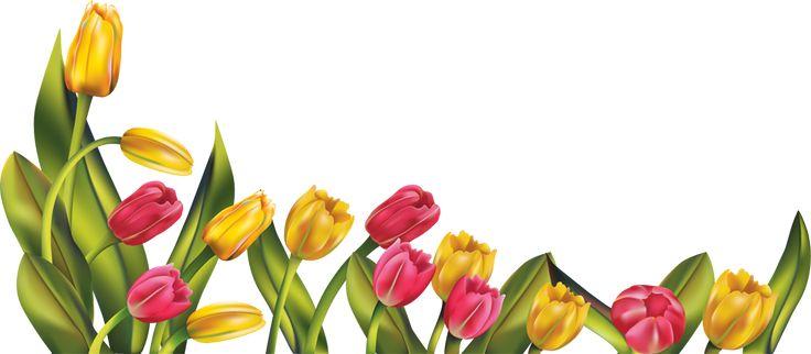 736x322 Easter Flower Border Clip Art