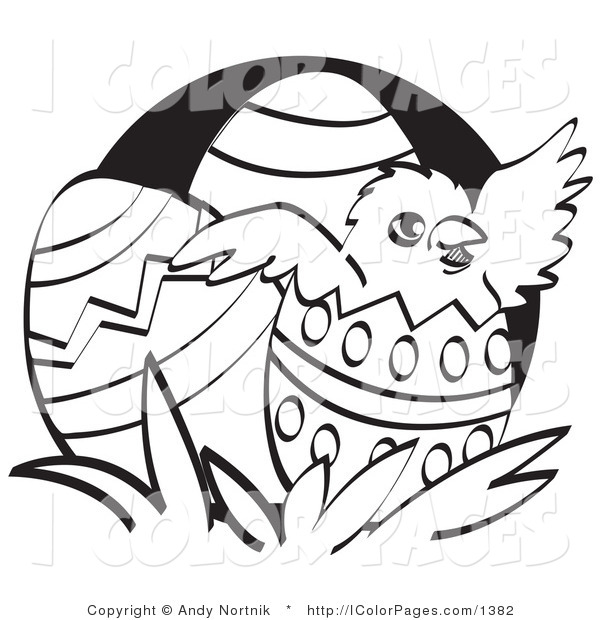 600x620 Vector Coloring Page A Blackd White Chick Hatching Out