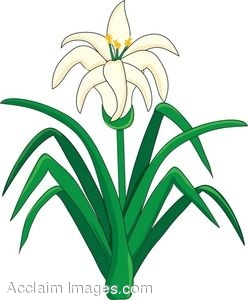 248x300 Clip Art Of An Easter Lily Flower Plant