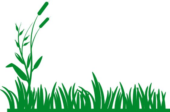 564x372 Clip art backgrounds and borders Grass Background Clip Art