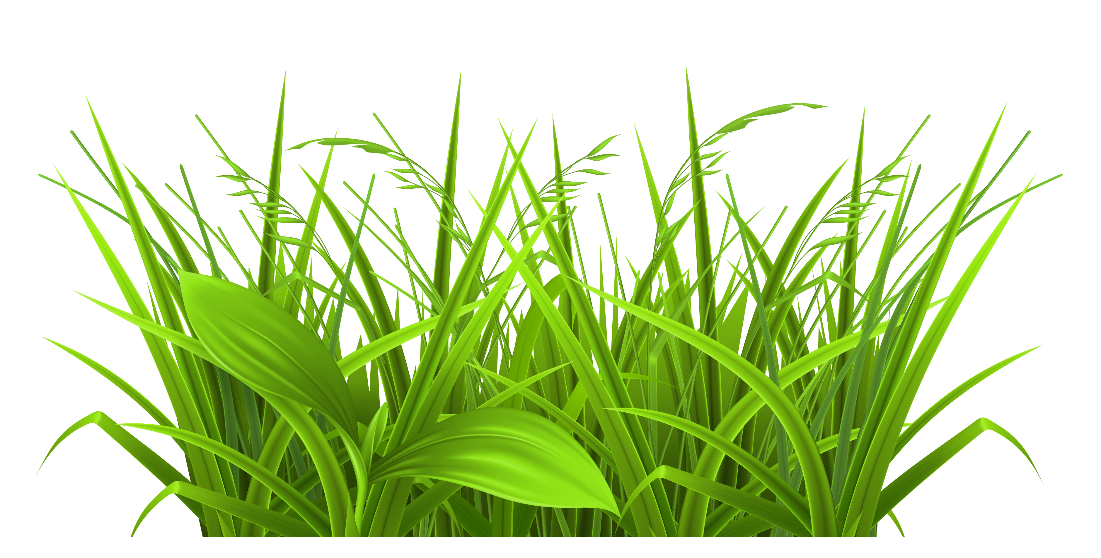 3758x1907 Decorative Grass Clipart Png Pictureu200b Gallery Yopriceville