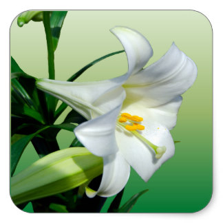 324x324 Easter Lily Stickers Zazzle