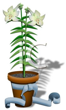 210x350 Potted Easter Lily With A Bow
