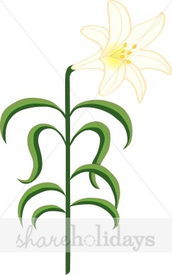 243x388 White Easter Lily Clipart Easter Clipart 3