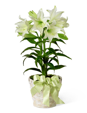 306x396 Deluxe Ftd Easter Lily Plant In Basket