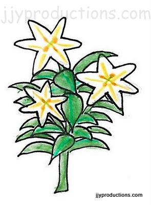 295x400 Easter Lily Bush