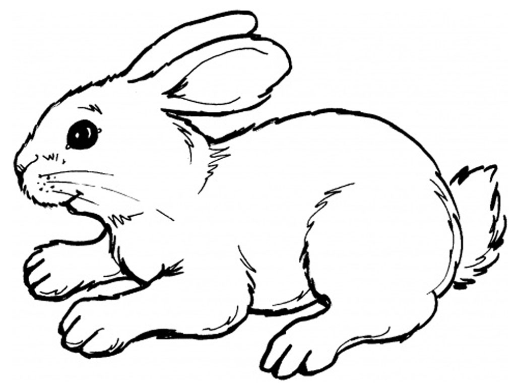 1024x768 Easy Rabbit Drawing