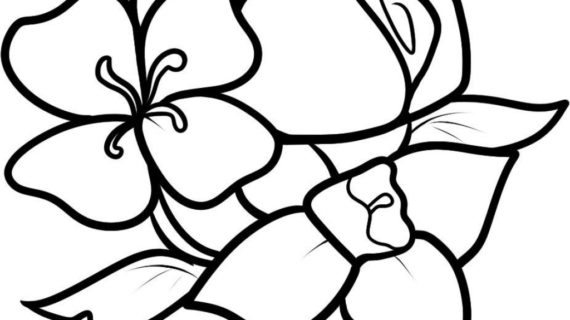 570x320 Photos Easy Drawing Pictures Of Flowers,
