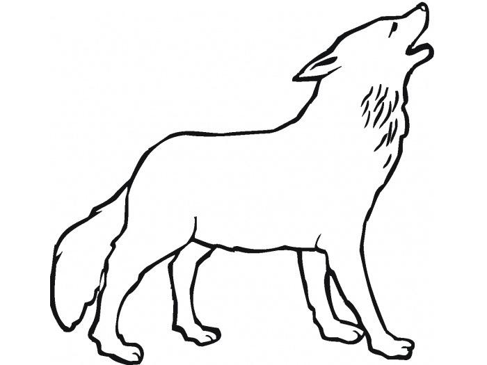 700x525 Drawn Wolf Simple